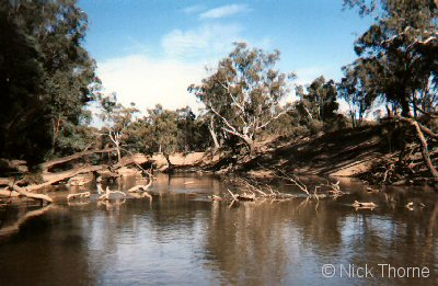 A photo of the Gouburn river in north east victoria showing instream woody debris (snags)